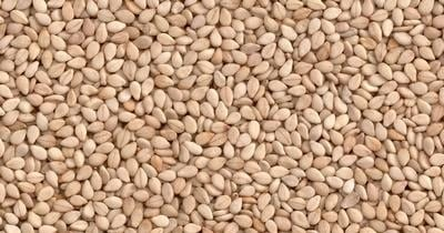 Sesame Seeds, Oilseeds, Spices Manufacturers | India | Bora